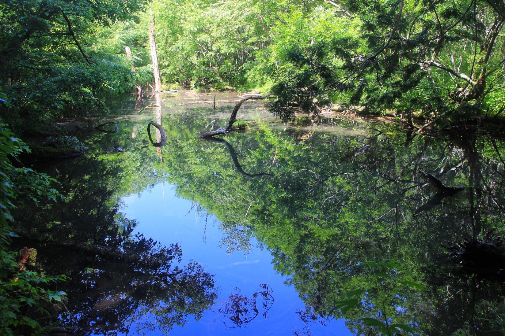 徳沢付近の池