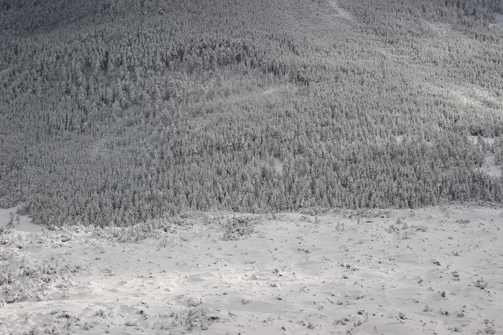 雪山シーズンインは北横岳で