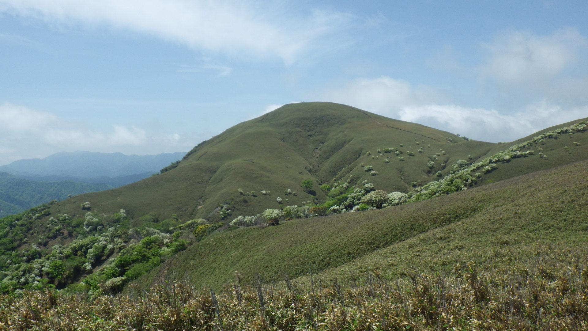 羊の放牧 竜ヶ岳